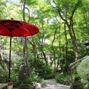 【Youtube更新】京都のような鎌倉。不思議な一条恵観山荘をライブ感覚でお届けします。