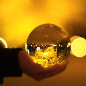 【東京・昭和記念公園】銀杏並木のライトアップ&日本庭園紅葉ライトアップまでの道のり