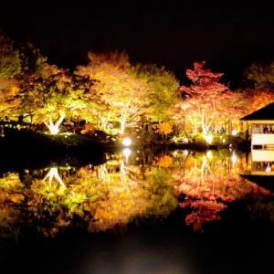 【東京】SONYa6400片手に日本庭園の幻想的な紅葉ライトアップを夜さんぽ/国営昭和記念公園