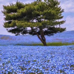 花畑のローンツリーのiPhone 11壁紙