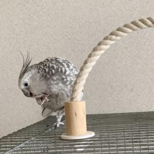 新しいペレット☆食べてね…!