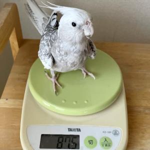 朝の体重チェックは忘れずに(o・∇︎・o)