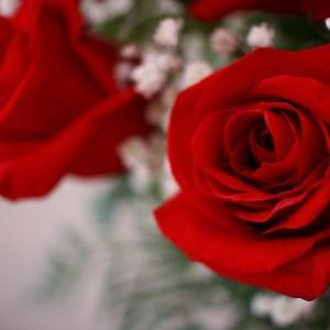 薔薇と数日間の食事写真