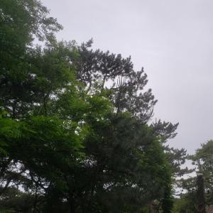 千葉 富津公園⑤早く帰ろう