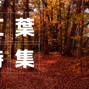 滋賀県でオススメの紅葉スポット20選[2020年版]