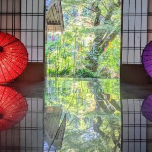 1200年以上の歴史を持つ『長寿寺』で開催中の「和傘ライトアップ」を見てきました / 湖南市