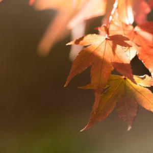 秋の母の気持ち