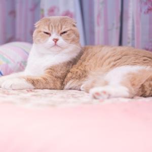 無印良品のワンピース(黒)を着た感想~猫の毛くっつく?~
