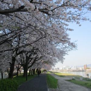 広島のリバーサイド早朝散歩・・・川面に吹く風が気持ちいいです 一日8000歩 運動不足解消とストレス解消です