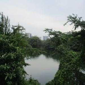 広島市は曇り・・・朝の気温は24度 秋の気配です 今週も頑張っていきましょう!