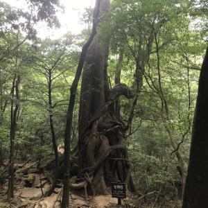 333)_33年ぶりの九州最高峰宮之浦岳に単独行です( ^ω^ )/ その3