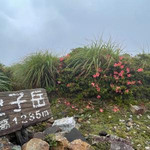 555)_五輪四連休を世界自然遺産の島で過ごす(^ ^) その10 最終日は愛子岳へ
