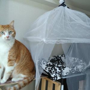 猫が快適に過ごせる部屋作りを目指す【寒さ・静電気対策】
