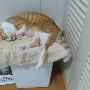 【トラ猫】我が家の猫達の見分け方〜尻尾がポイント〜
