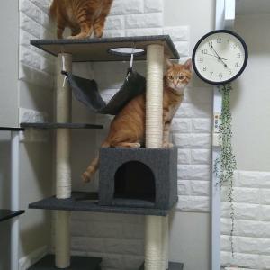 キャットタワー設置しました