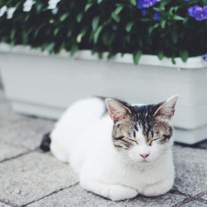 【猫のモノ】今年買って良かったやつ!