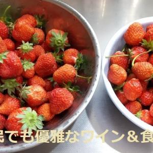 《 無農薬イチゴ 🍓 》