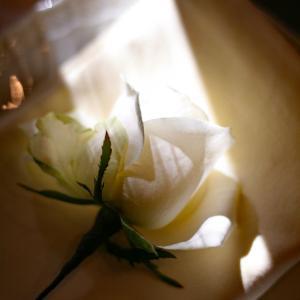 最後のエネルギーで必死に癒してくれる。だから私は切り花を買わない。
