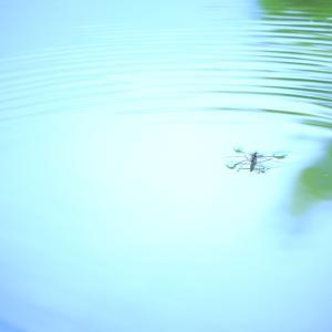 水のステージ