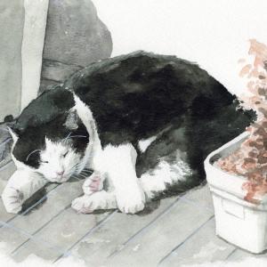 猫の日企画だよ!!!