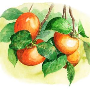 新作柿の木