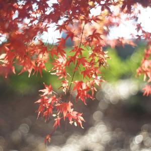 子どもと楽しむ紅葉狩り