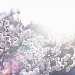 春は撮影の季節