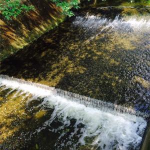 西城秀樹氏が水分補給の大切さを強調 実践してます