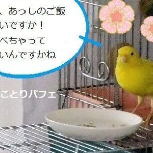 小鳥のこの姿だったら、白いご飯三杯はイケる