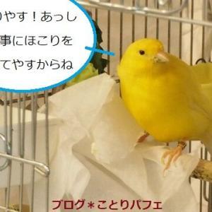 毎日働いている小鳥。その姿にシビレます