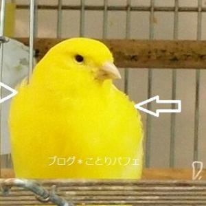 小鳥の人生(鳥生)も大変だよね。がんばれー!
