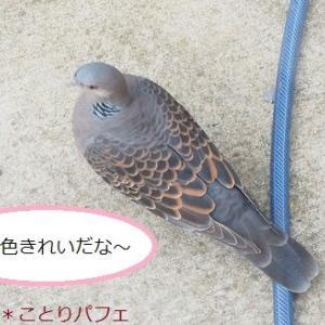 「うそ!?」思わず二度見しちゃったよ~な野鳥