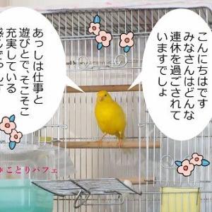 ピッタリな小鳥の名前と「やっぱりな」な姑