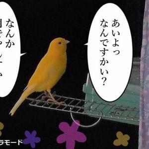 鳥さんの落とし物は香ばしいカオリ←やっぱ変態…