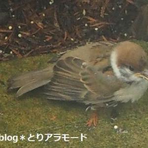 愛情たっぷり鳥の子育て。本当にお疲れ様です。