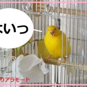 親鳥の愛がすごい。よかったねヒナちゃん。