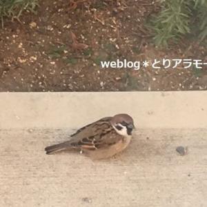 義父が飼育を放棄した小鳥。ごめんね。