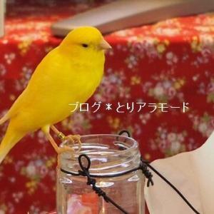 小鳥だって美味しいものが好き?