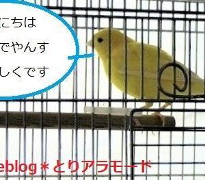 小鳥によって苦手なものが違うんですね