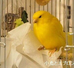 小鳥にも職業があるんです。うちの場合は…