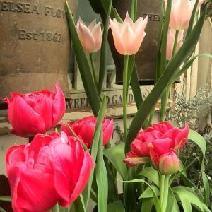 フロントガーデンの春