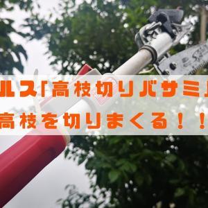 【超軽量】アルス製おすすめ高枝切りバサミ&のこぎりで庭の枝切りに挑戦!!