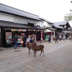 奈良に行く(2019.1)82.奈良公園