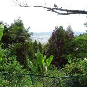 生駒山に登る(2019.5)71.梅屋敷