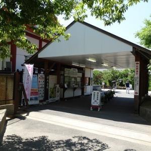 西ノ京・郡山・天理に行く(2019.6)34.薬師寺