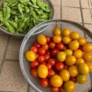 我が家の小規模家庭菜園の実り