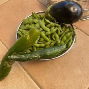 自然の恵み 庭で採れる野菜達