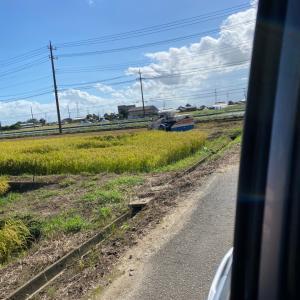 稲刈り始まってます  駐車スペースにはご注意を