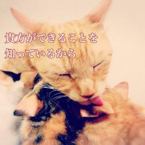 今日のメッセージ〜応援〜
