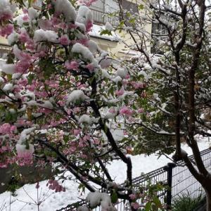 春の大雪は如何ですか?
